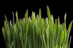Growing grass Stock Photos