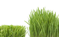 Growing grass Royalty Free Stock Photography