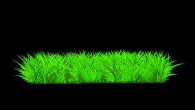Growing Grass Animation Graphic Element. Alpha Channel included. stock footage