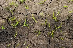 Growing grass on ground Royalty Free Stock Photo