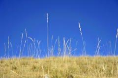 Growing grass under blue sky. Taken in Qilian mountian Royalty Free Stock Image