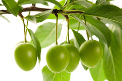 Growing green fruits isolated on the white Royalty Free Stock Image