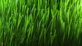 Growing green grass plant 4k stock video footage