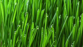 Growing green grass plant stock footage