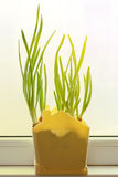 A growing green onion into a pot Royalty Free Stock Photos