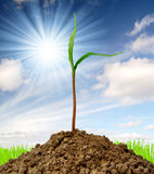 Growing green plant Royalty Free Stock Photography
