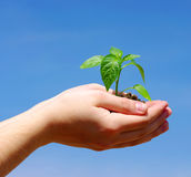 Growing green plant Stock Images