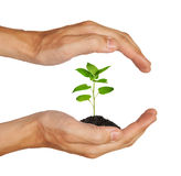 Growing green plant royalty free stock photo