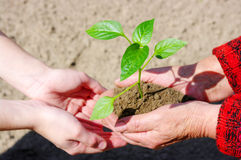 Growing green plant Stock Image