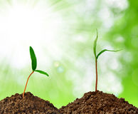 Growing green plant Stock Photography