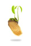 Growing green plant Royalty Free Stock Images