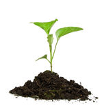 Growing green plant Stock Photos
