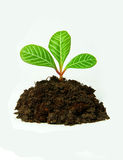 Growing green plant Royalty Free Stock Photos