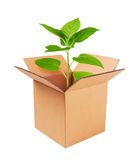 Growing green plant in a box Royalty Free Stock Photo