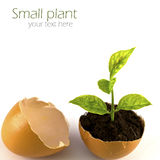 Growing green plant in egg shell isolated Royalty Free Stock Images