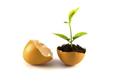 Growing green plant in egg shell isolated Stock Image