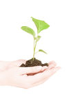 Growing green plant in a hand Royalty Free Stock Photos
