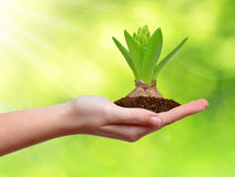 Growing green plant in hand Stock Images