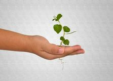 Growing green plant in a hand Stock Images