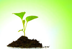 Growing green plant isolated. On white-green background Royalty Free Stock Photo