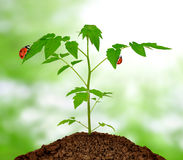 Growing green plant Stock Photo