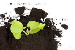 Growing green plant in soil Royalty Free Stock Photos