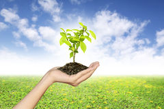 Growing green seedlings in a hand Stock Photos