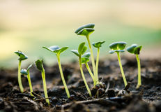 Growing green sprout Royalty Free Stock Photos