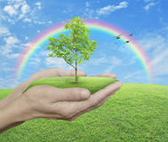 Growing green tree in hands over green grass with blue sky, clou Royalty Free Stock Photo