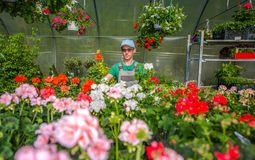 Growing Greenhouse Flowers Stock Photos
