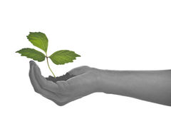 Growing in a hand Royalty Free Stock Photography