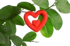 Growing Heart Stock Image