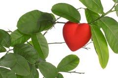 Growing Heart Stock Photo