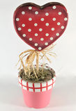 Growing heart plant, valentine day. Image of growing red heart plant stock photos