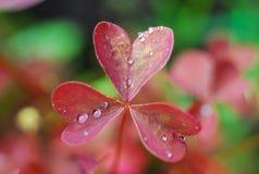Growing hearts Stock Image