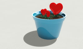 Growing hearts in a pot Stock Images