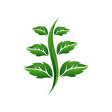 Growing Leaf Icon. Strong, Simple and Professional design template, Perfect logo for various Consulting Business Royalty Free Stock Photography