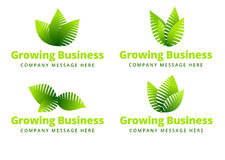 Growing Leaf logo vector illustration