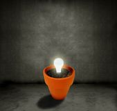 Growing Light bulb Stock Images