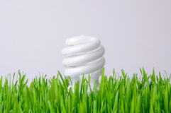 Growing Light Bulb - Environmental Concept Royalty Free Stock Photo