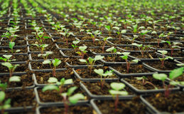 Growing Little Plants Stock Photography