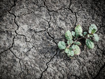Growing little tree on dry and crack soil Stock Photo