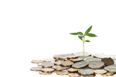 Growing Little Tree Out Of Coins. Small tree growing out of coin on a white background Stock Photo