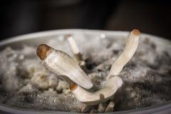 Growing mashrooms macro shoot magic natural plants royalty free stock photo