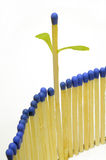 Growing matchstick Royalty Free Stock Image