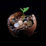Growing Money Stock Photos