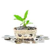 Growing money Royalty Free Stock Photography