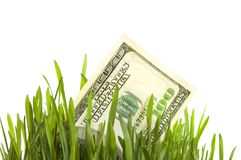 Growing Money. Close-up of 100$ in a fresh green grass.Studio isolated stock images
