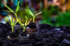 Growing Money stock image