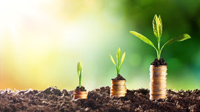Growing Money Royalty Free Stock Photo